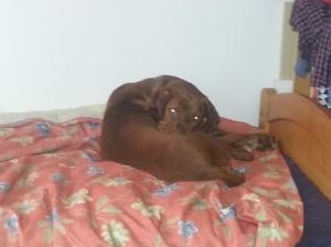 Egyedül az ágyban